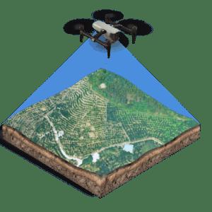 Trichogram drones